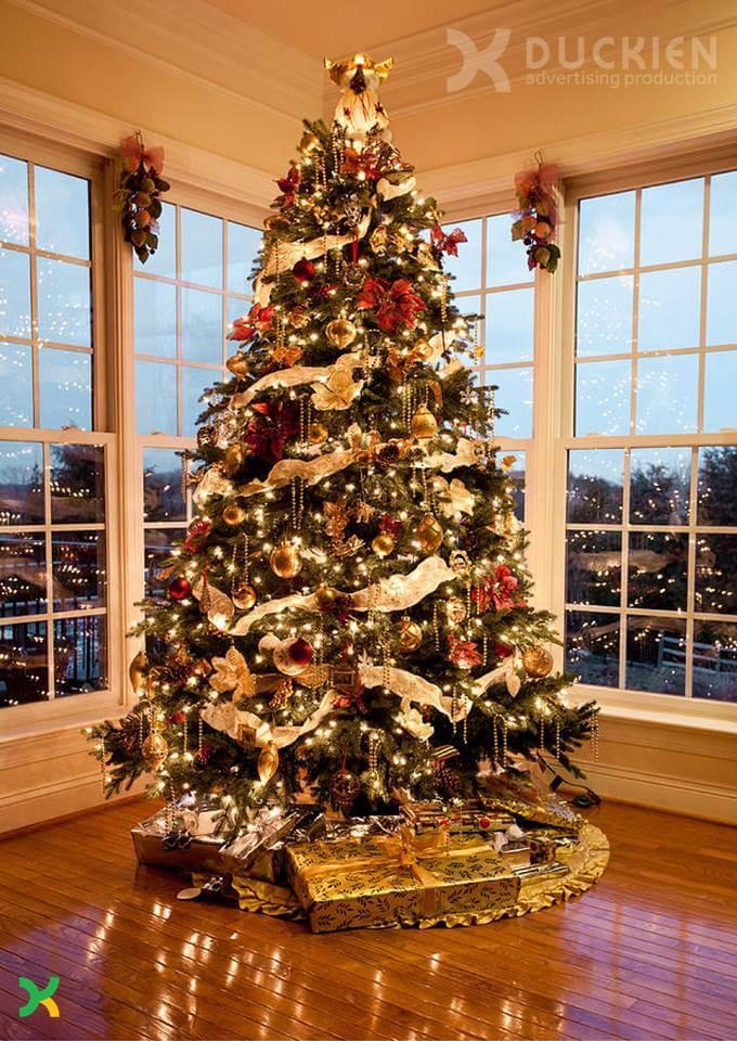 Thiết kế và dựng cây thông Noel
